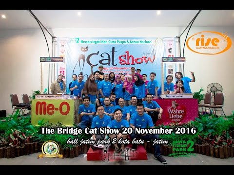 The Bridge Cat Show 2016 {east java cat community & jatim park 2} 720p 60fps