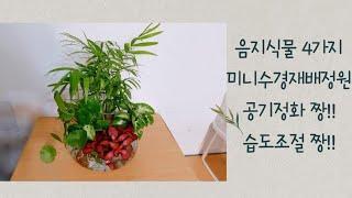음지식물 4가지 미니수경재배정원, 공기정화짱!! 습도조…
