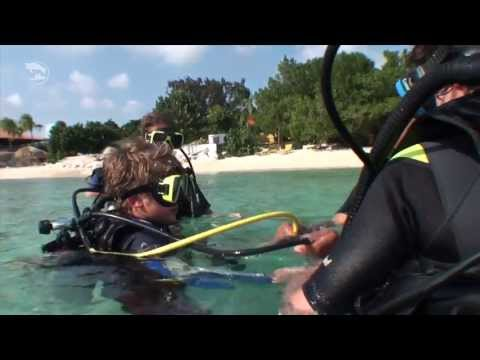 Caribbean Sea Sports & Turtle and Ray Productions