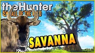 SAVANNA Hunting! BROKEN? Wildebeest Stalking - theHunter Call of the Wild Savanna Gameplay