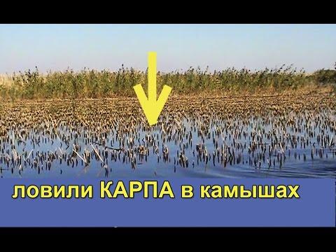 ловили Карпа в камышах на поплавочную удочку с дальним забросом. Насадка кукуруза. fishing