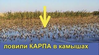 ловили Карпа в камышах на поплавочную удочку с дальним забросом. Насадка кукуруза. fishing(ловили Карпа в камышах на поплавочную удочку с дальним забросом. Насадка кукуруза. В водоеме водятся: красн..., 2016-04-16T15:53:34.000Z)