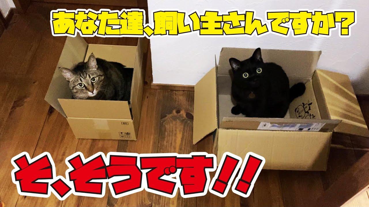 玄関を歩いていたら段ボールの中に2匹の猫が嬉しそうに入っていました