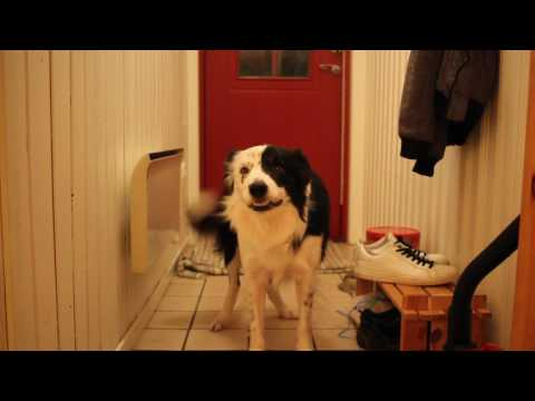 "Singing dog ""Alo"" (Acapella version)"