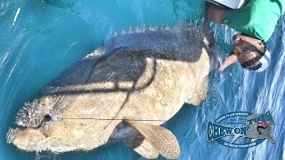 Most Popular Youtubers Fishing Videos - Fisherman Catching Big Fish Grouper - Most Subs Fishing