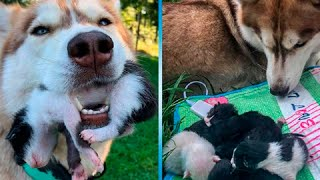 ▓▒░ Собака нашла в лесу выброшенных котят и стал им мамой. Животные добрее людей! ★★★