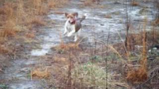 Running Beagles In London Kentucky