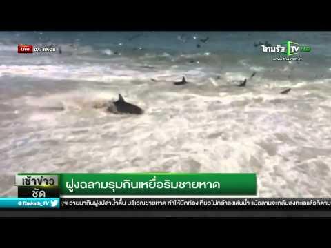 ฝูงฉลามรุมกินเหยื่อริมชายหาด