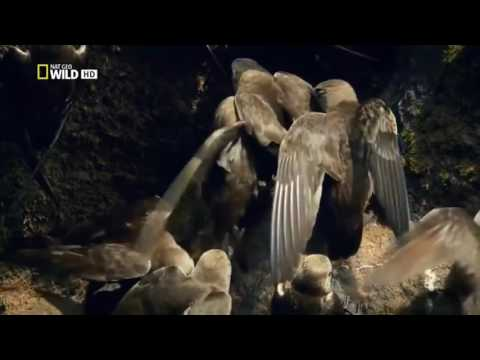 Nat Geo Wild HD Wild Untamed Brazil Jewels Of The Jungle HD Nature Documentary
