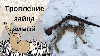 Тропление зайца по первому снегу 2018