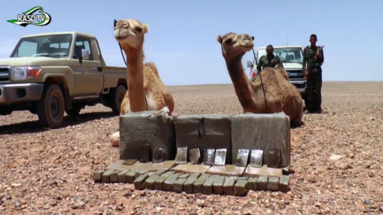 El ejército saharaui intercepta un cargamento de droga procedente del muro marroquí