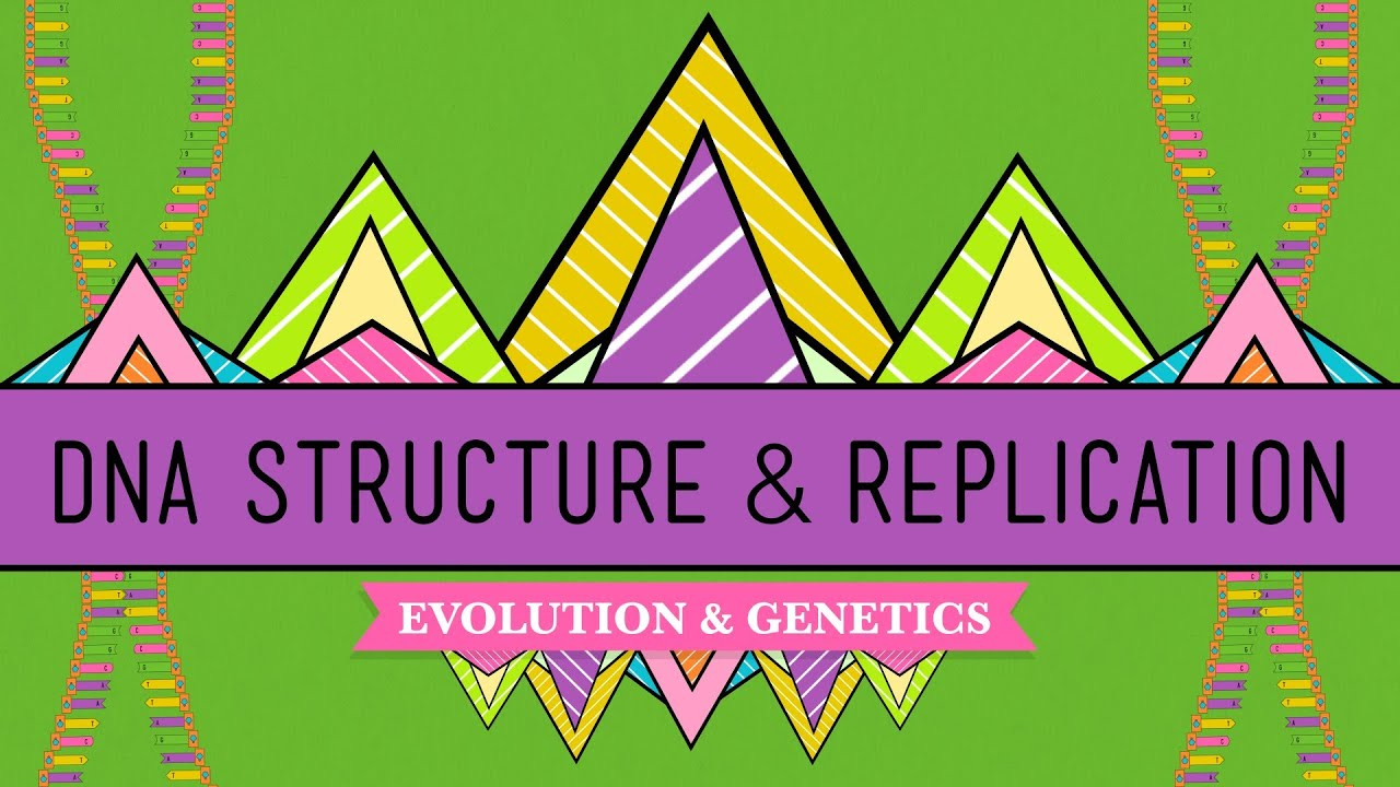 DNA Structure and Replication Crash Course Biology 10 YouTube – Dna Structure and Replication Worksheet