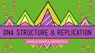 Crash Course: Biology: DNA Structure thumbnail