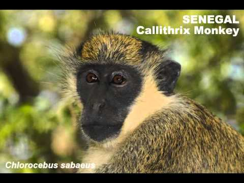 Wildlife of Senegal