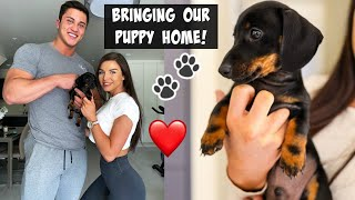 COLLECTING OUR MINI DACHSHUND PUPPY | THE BEST DAY EVER!