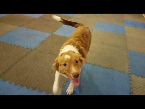 Adopt Elsa!  One Love Animal Rescue in Mount Laurel, NJ