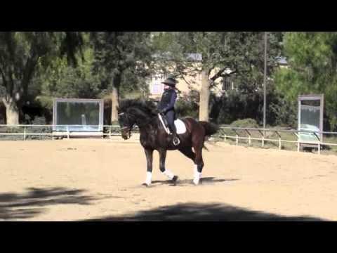 dreamhorse com horses for sale