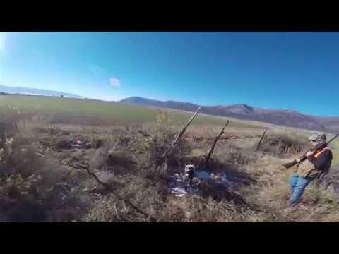 Pheasant Hunting near Moroni Utah