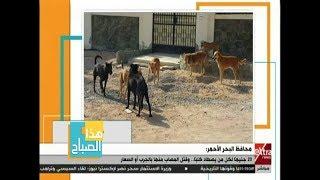 هذا الصباح | محافظة البحر الأحمر: 20 جنيها لكل من يصطاد كلباً