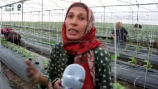 بالفيديو| فلاحة تطالب السيسي بخفض الأسعار وتدعوه لزفاف ابنتها