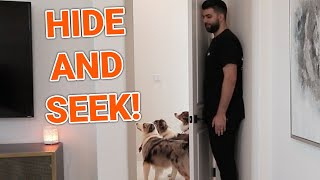 Hiding From My Dogs! They BROKE my wife's decorations!