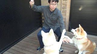 秋田犬、歴史的和解。仲直りしました!