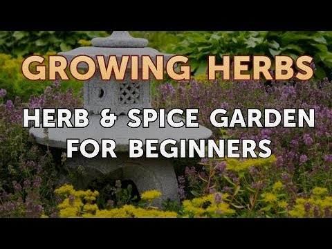 Herb & Spice Garden for Beginners
