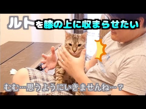 猫封じ〜ルト編〜