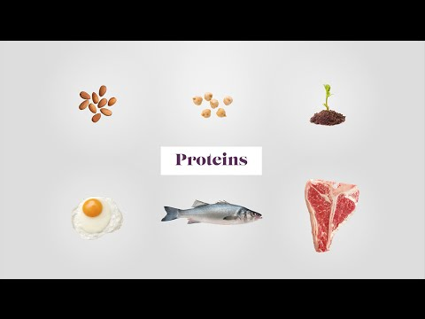 Plant & Animal Proteins the Building Blocks of the Body