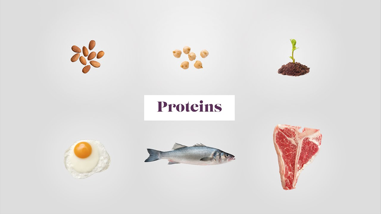 what are the building blocks of proteins