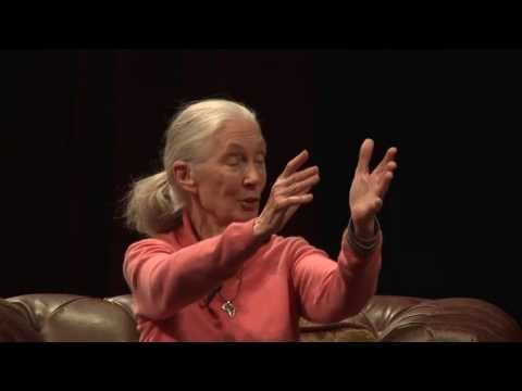 Live Stream: Dr. Jane Goodall & Dr. Richard Wrangham - Great Apes Summit