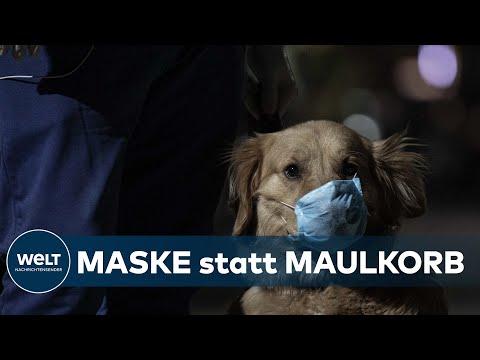 CORONA BEI HUND UND KATZ: Covid-19-Meldepflicht für gefährdete Haustiere kommt