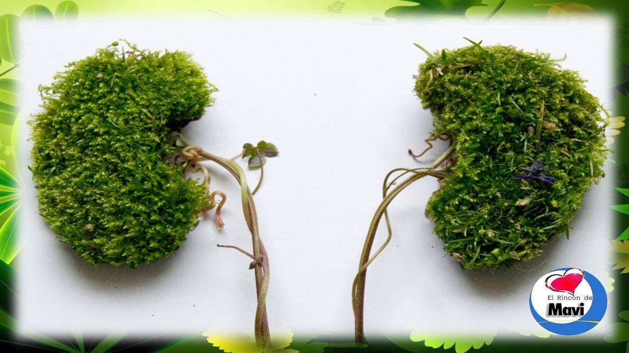 Las mejores plantas medicinales para limpiar los riñones de forma