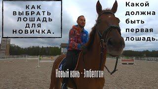 Новый конь. Какой должна быть первая лошадь.?? Как выбрать лошадь для новичка?