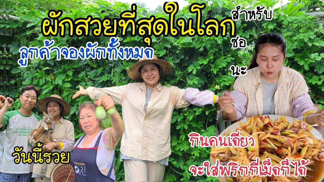 EP.382 |พาชมผักไทยทั้งหมด ที่ลูกค้าจองไว้ สวยมากๆ จองหมดสวนเลย กินตำมะม่วงเผ็ดๆเเซ่บๆจ้า
