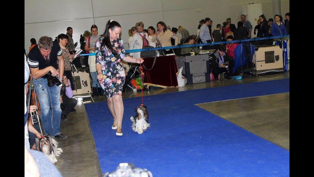 Как подготовиться к выставке собак,что взять с соб