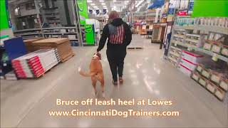Cincinnati Dog Trainers Off Leash K9