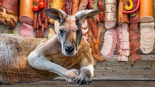 Кенгурятина. Мясо кенгуру везут в Россию