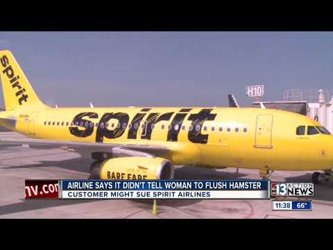 Woman considering suing Spirit Airlines after flushing hamster