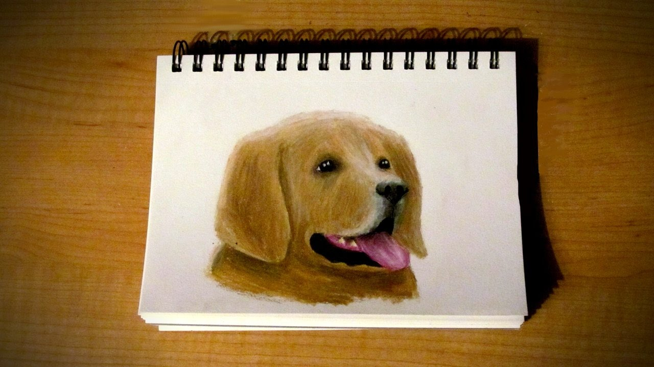 Timelapse dessin d 39 un chien youtube - Dessin d un chien ...