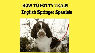 How To House Train English Springer Spaniels