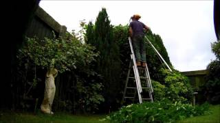 How to reduction a laurel