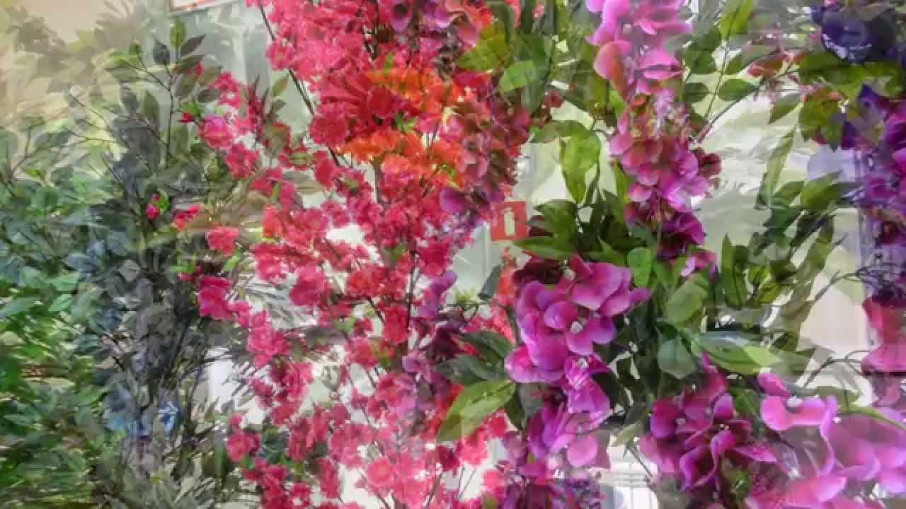 Распродажа японских карликовых деревьев бонсай. Купить бонсай с доставкой за 2 часа. Подарки каждому!