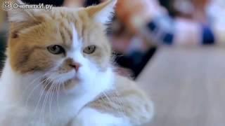 Приколы с толстыми котами!)