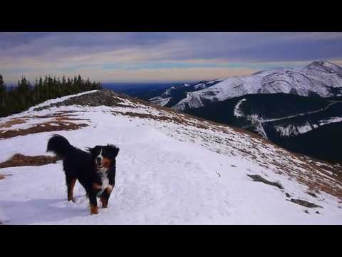 Breath taking view and the excited bernese mountain dog