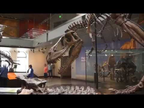 Dinosaur Exhibits - Los Angeles Natural History Museum