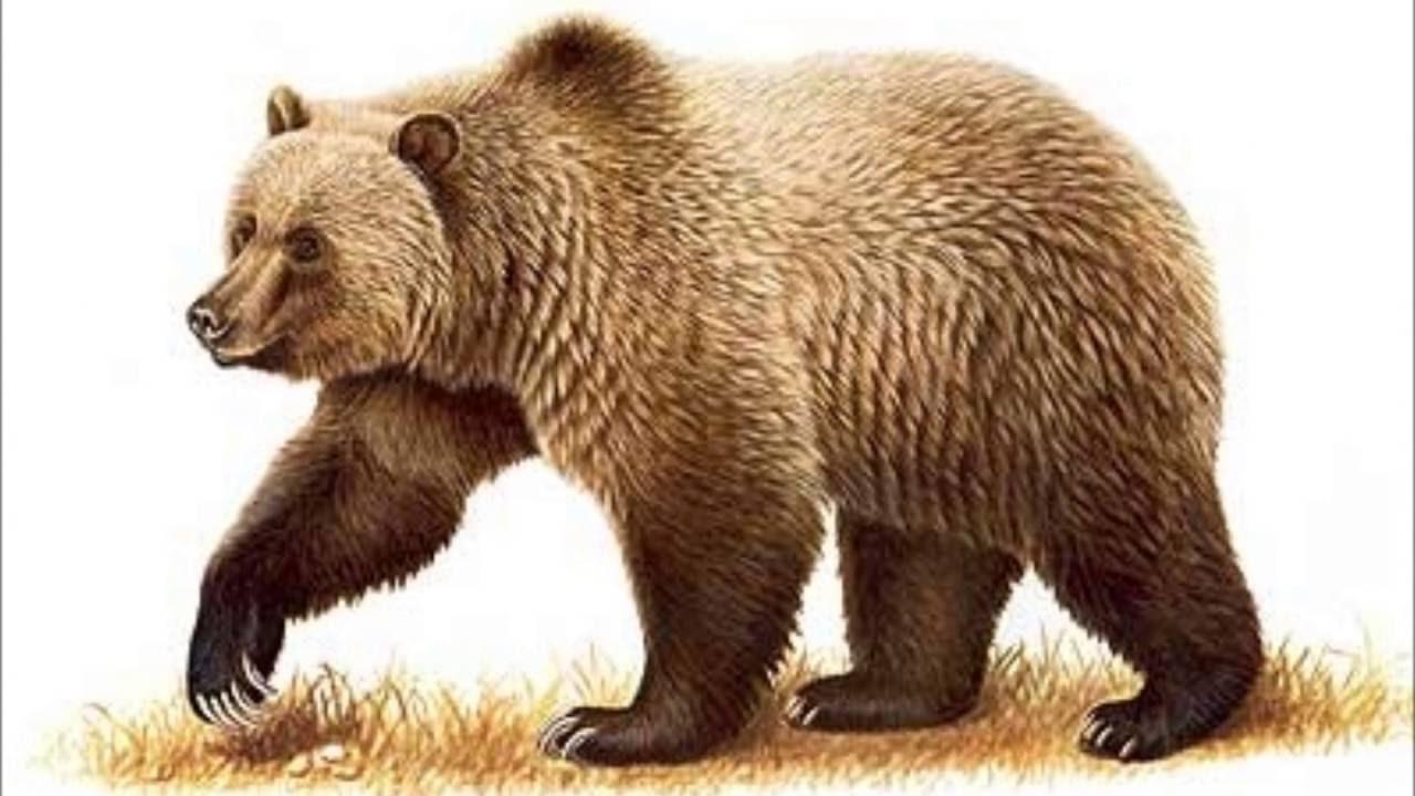 Утро, картинка медведи для детей
