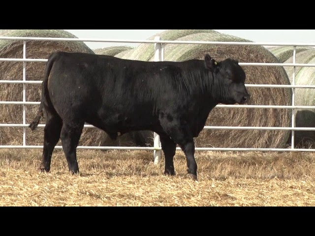 Express Ranches Lot 470