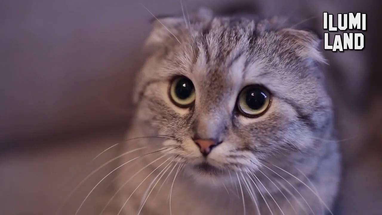 Видео привет я кот песня