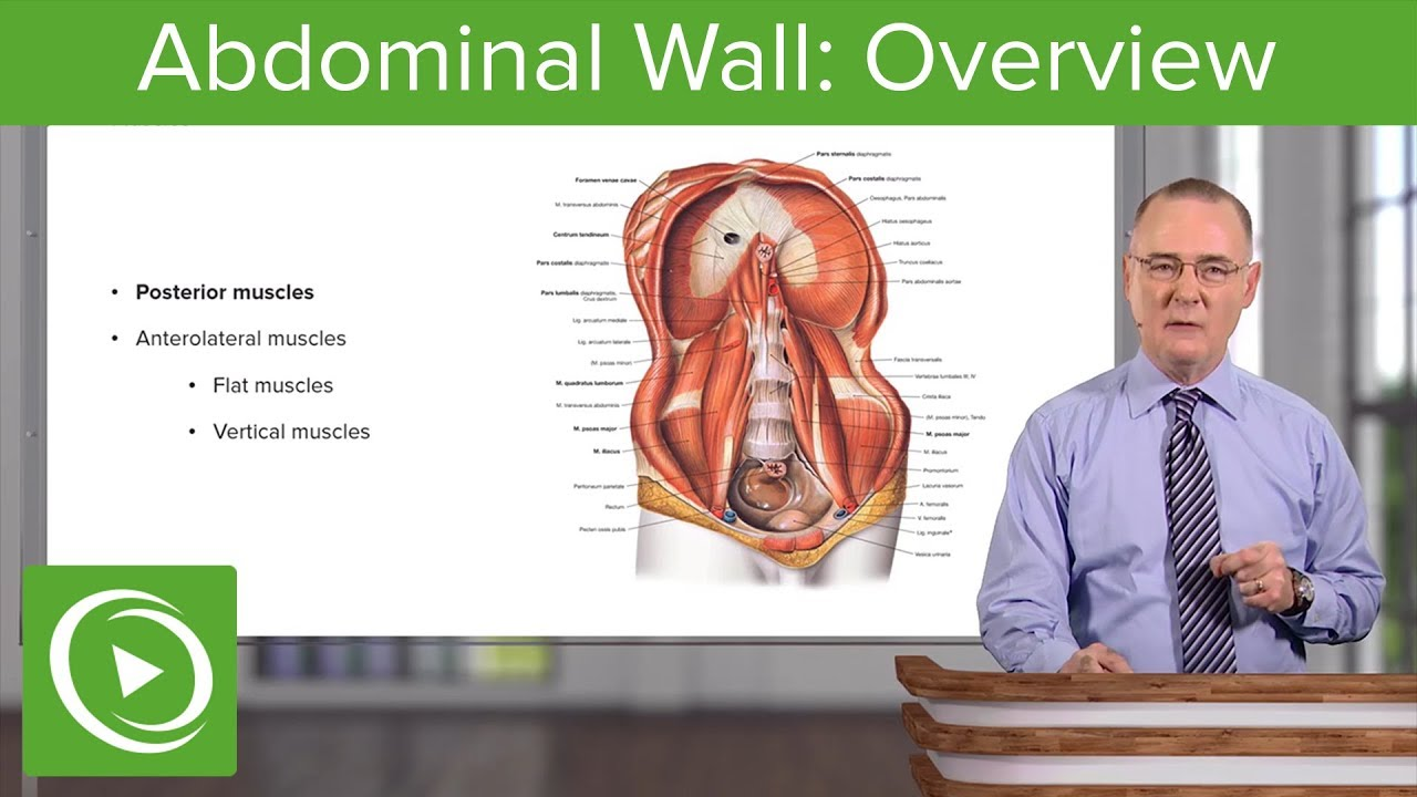 Abdominal Wall: Overview – Anatomy | Lecturio